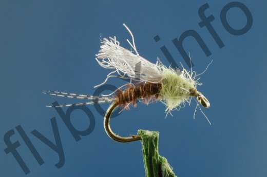 PMD Transitional Emerger