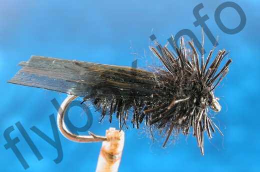 Black Moser Adult Sedge