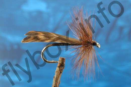 Woodcock Winged Sedge
