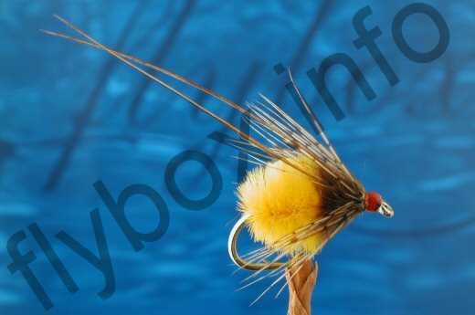 Orange Longhorn