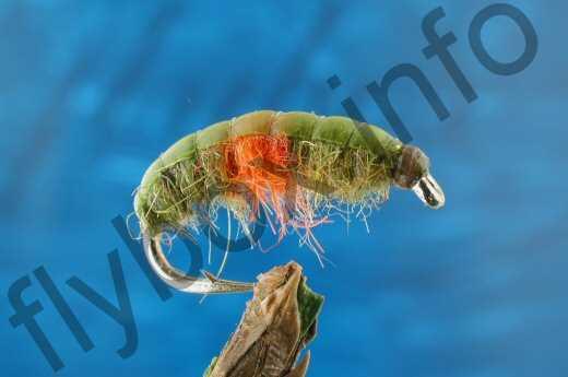 Hotspot Shrimp