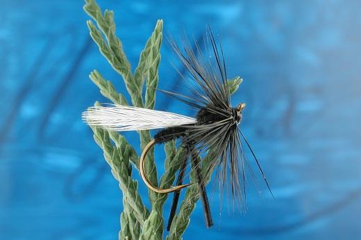 Winged Hawthorne