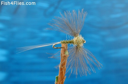 CDC Biot Spinner Blue Winged Olive