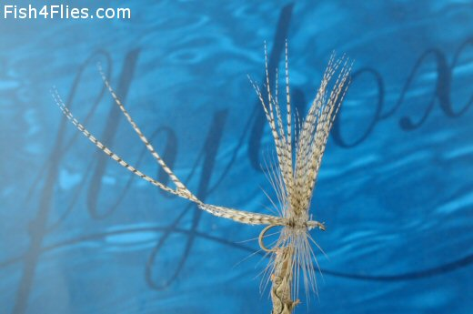 Two Feather Fly
