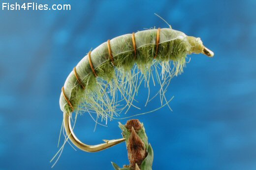 Freshwater Shrimp - Insect Green