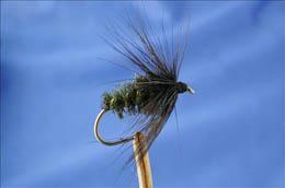 Black & Peacock