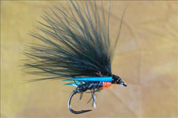 UV Straggle Kingfisher Cormorant