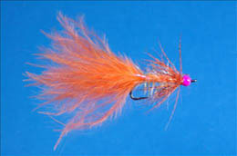 Orange and Pink Darter