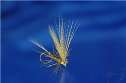 Philip White Active Mayfly