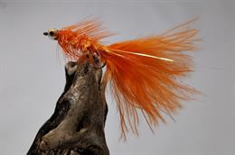 Orange Tinhead