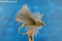 Olive CDC Adult Caddis